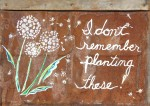 """I Don't Remember Planting These   $35 23"""" x 16.5""""   Acrylic on rusted tin shingle   (#1321)"""